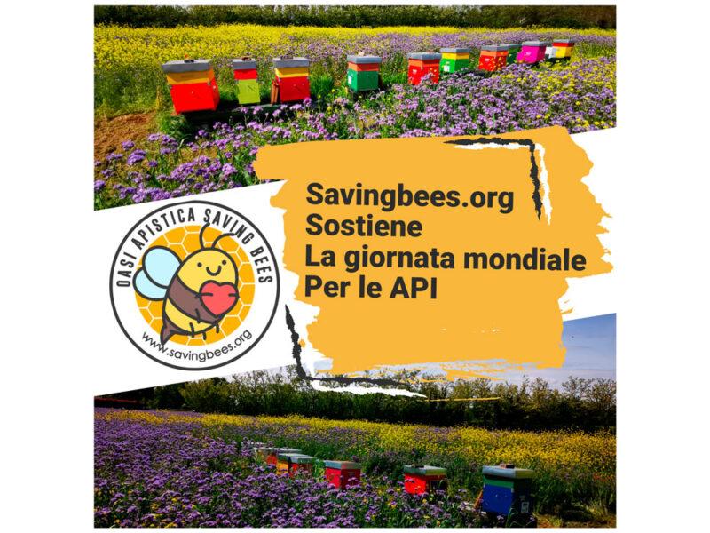 saving bees - isoengineering sostiene il progetto oasi apistica